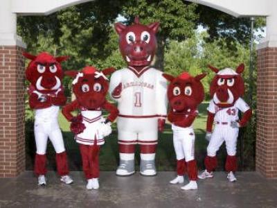 University of Arkansas Mascot